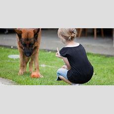 Fünf Regeln Für Kind Und Hund