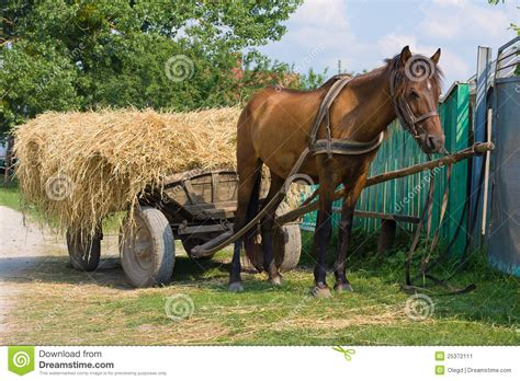 horse   cart loaded hay stock image image  farm