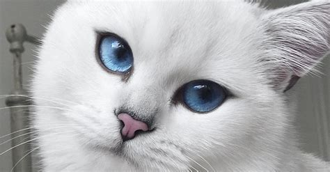 cat  blue eyes  natural winged eyeliner takes flawless selfies huffpost