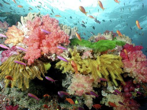 breathtaking   coral reefs