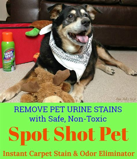 How To Remove Dog Urine Stains And Odor From Carpet
