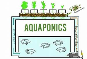 A Growing Passion Aquaponics  From Fish Poop To Plant