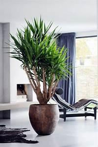Grande Plante Verte : plante d 39 int rieur yucca elephantipes id al pour la ~ Premium-room.com Idées de Décoration