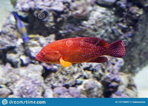 grouper coral fish body predator animal
