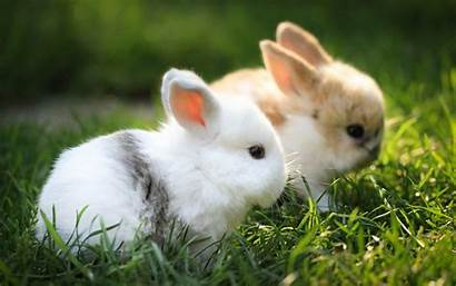 Bunny Wallpapers Cool