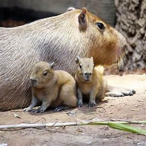 Cleveland Metroparks Zoo - ZooBorns