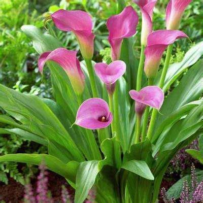 flower bulbs garden plants flowers garden center