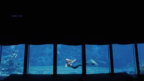 weeki wachee mermaid documentary  spring review