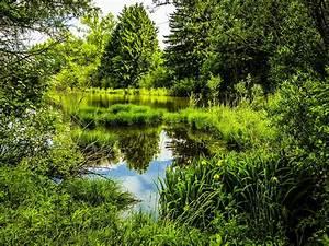 Munich, Bavaria, Germany, Hdri, Nature, Pond, Parks, Grass, Hdr