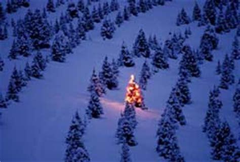 Christmas Tree Shop Middletown Ri by Minnesota Christmas Tree Farms Rainforest Islands Ferry