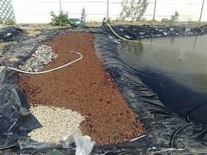 Bache Separation Jardin : forum aquajardin bassin koi jardin aquatique mare ~ Premium-room.com Idées de Décoration