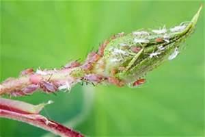 Spinnmilben Natürlich Bekämpfen : spinnmilben an zimmerpflanzen bek mpfen ~ Buech-reservation.com Haus und Dekorationen