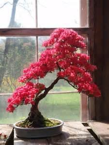 Red Azalea Bonsai Tree