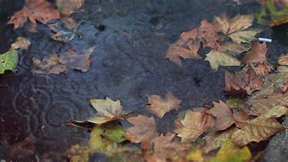 Fall Animated Nature Gifs Leaves Falling Remarkable