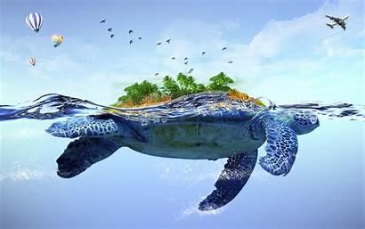 Turtle Cartoon Desktop Wallpapers 3d Pro Wallcoo