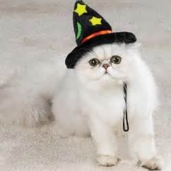 cat hats cats in the hats 15 hilarious pictures kitty bloger