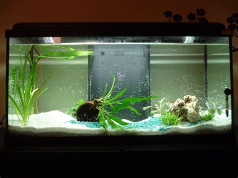 faire baisser nitrate aquarium 90 litres mon premier vrai aquarium avec de vrai poisson