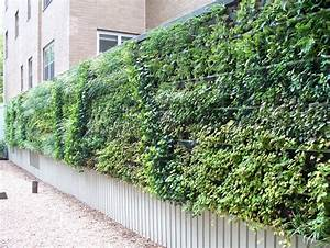 Green, Walls, Combat, Pollution, In, Cities, And, More