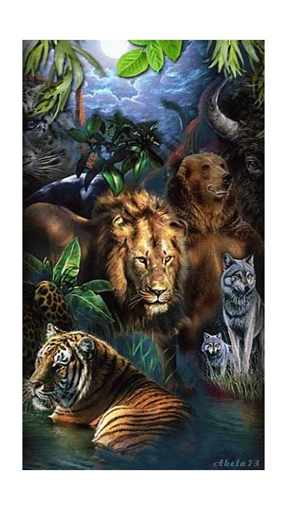Animals Wild Jungle Animal Animales Cats Lion