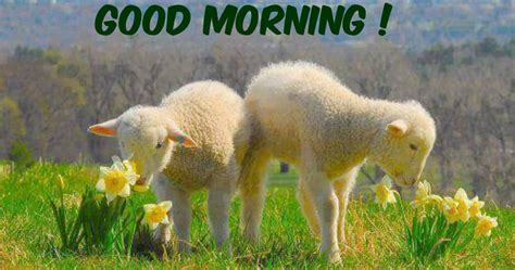 good morning images beautiful messages