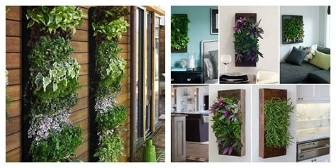 Indoor Wall Planter For Herbs