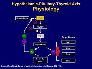 Thyroid Dysfunction  Clinical Overview