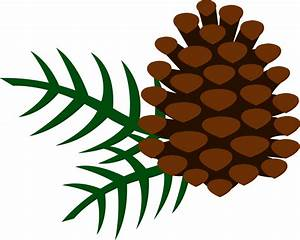 Pine Cone and Pine Needles - Free Clip Art