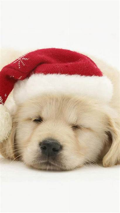 Christmas Screensavers Wallpapers Iphone Puppy Hat