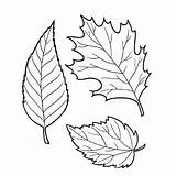 Leaves Coloring Pages Tree sketch template