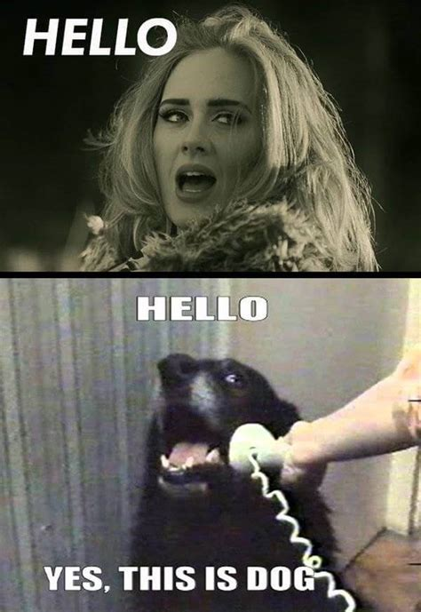 Adele Meme - 28 adele hello meme pictures because you really didn t hear that song enough today