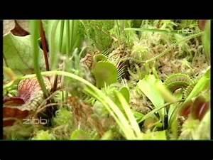 Pflanzen Terrarium Einrichten : karnivoren terrarium einrichten tips und tricks doovi ~ Orissabook.com Haus und Dekorationen