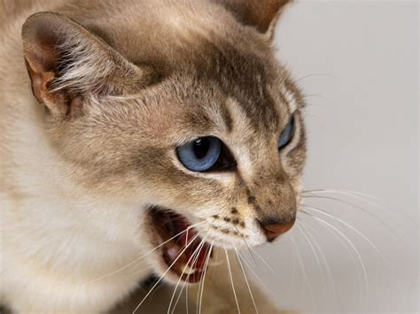 Animal Hd Wallpapers 1600x1200 - cats animals 1600x1200 wallpaper high quality wallpapers