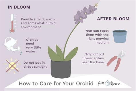 How To Care For Your Orchids