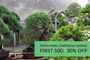 The  U0026quot Developing Coniferous Bonsai U0026quot  Course Will Soon Be