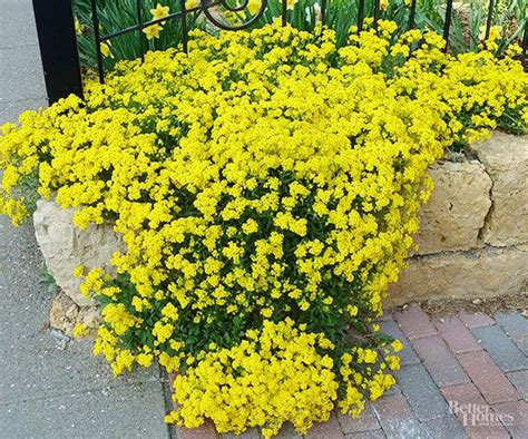 yellow perennial flowers for sun best plants for rock gardens gardens sun and spring