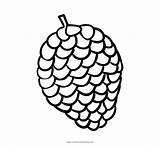 Pine Coloring Cone Pigna Colorare Disegni Ultra sketch template