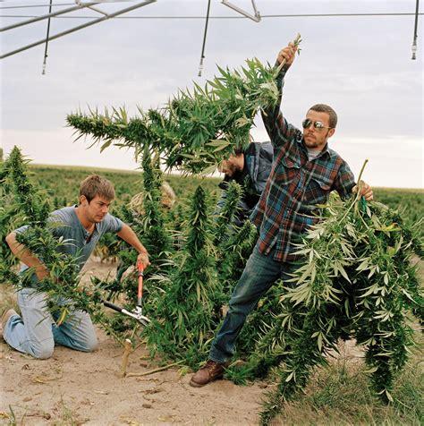 grow ls for weed organic weed marijuana growers go green