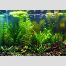 Freshwater Aquarium  Best 5 Freshwater Aquarium Plants