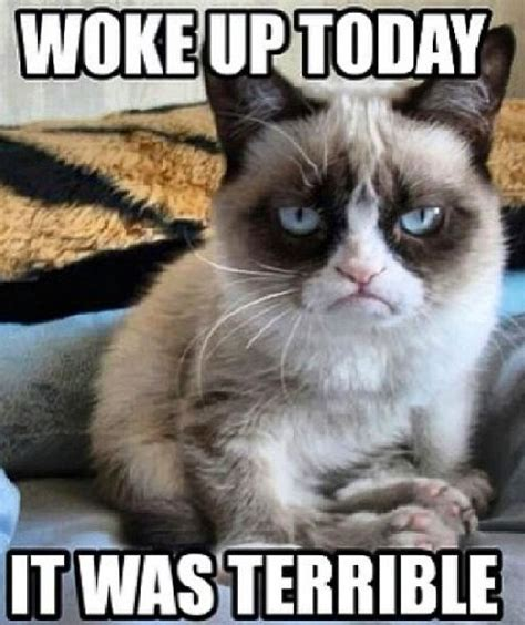 Quotes About Waking Up Cat. QuotesGram