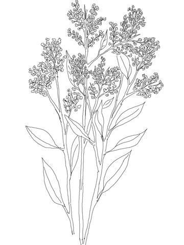 Gypsophila or Baby's Breath Coloring page | SuperColoring.com