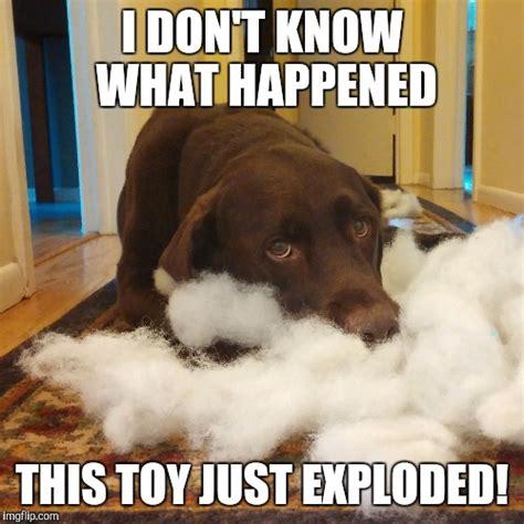 Labrador Meme - 27 black lab dog jokes pug jokes