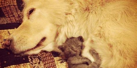 kittens   hug  amazing dog huffpost