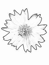 Sunflower Coloring Pages Printable Gogh Van Sunflowers Colouring Sheets Books Yellow Bestcoloringpagesforkids sketch template