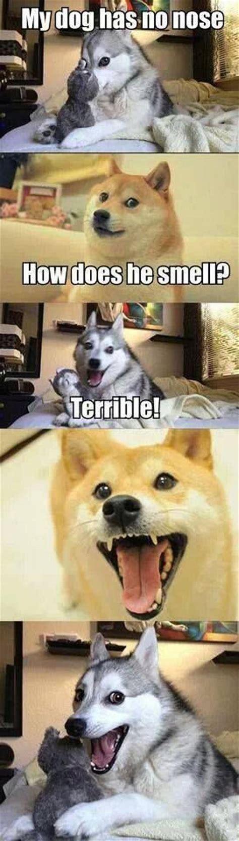 Funny Doge Memes - funny dog joke meme dump a day