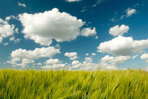climate models overestimate  ability  clouds