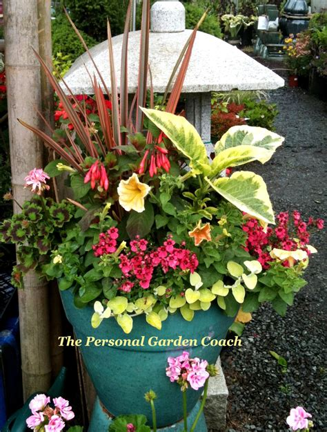 Brainstorming A Container Garden Design Black And Tan