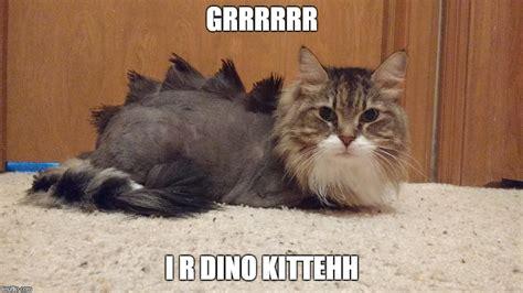 dino kitten imgflip