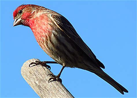 migratory bird guide