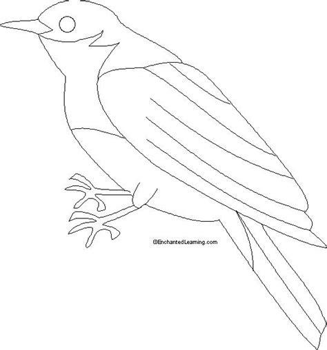 eastern bluebird coloring printout enchantedlearningcom