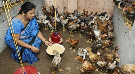 tnau agritech portal farm enterprises